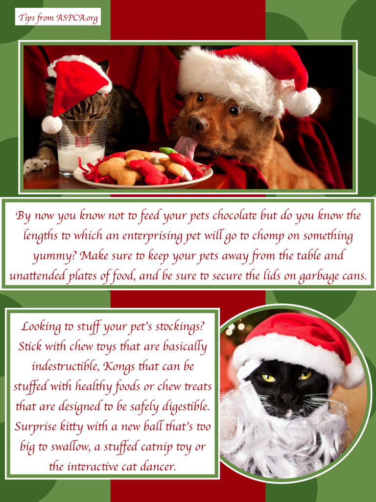 Tips for keeping your pet safe this holiday